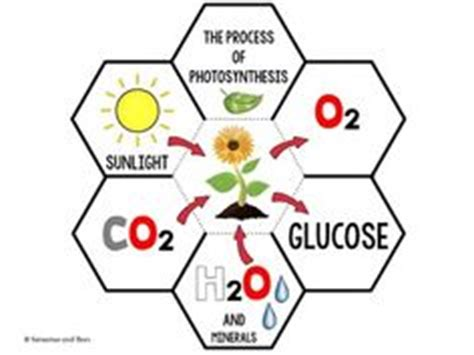 AP Biology CH 8 - Photosynthesis - Test Questions